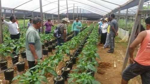 Idam incentiva tecnologia da plasticultura em plantio de hortaliças