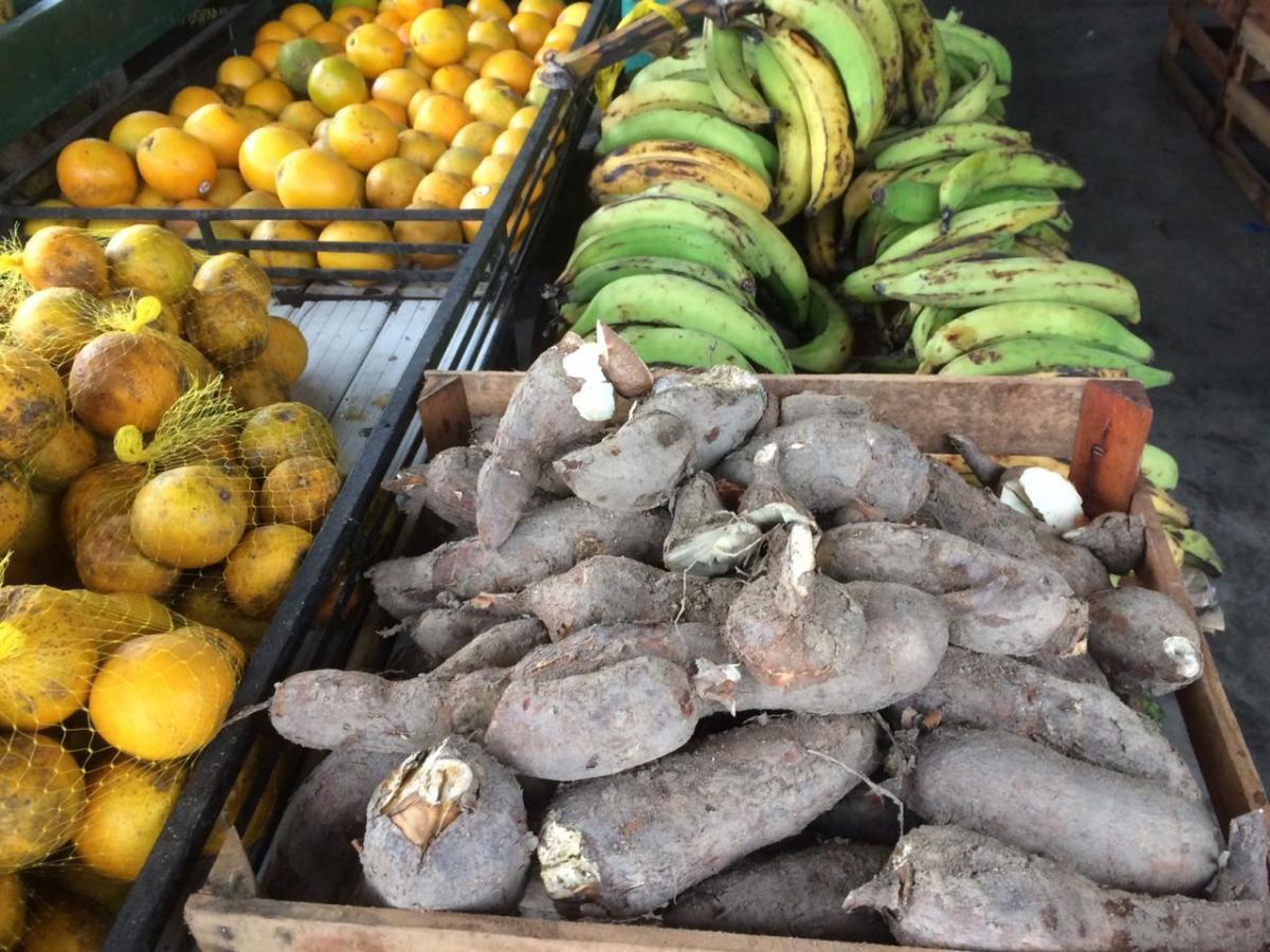 Exército em Tefé (AM) deve comprar R$ 243 mil da agricultura familiar