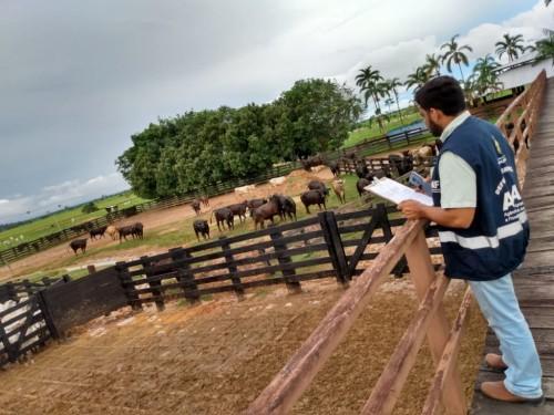 Amazonas entra na última semana da campanha contra febre aftosa