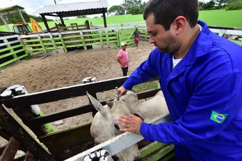 Vacinação de combate à febre aftosa começa neste domingo (15/03) no Amazonas