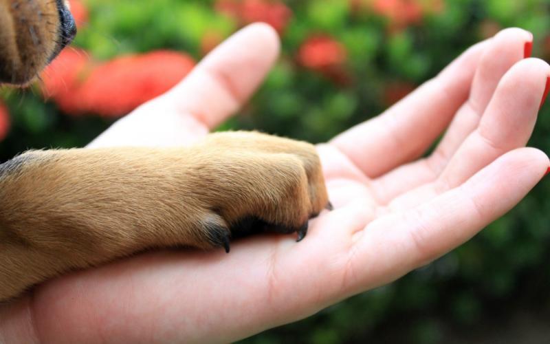 Pets e coronavírus: Sema orienta sobre cuidados com animais de estimação durante pandemia
