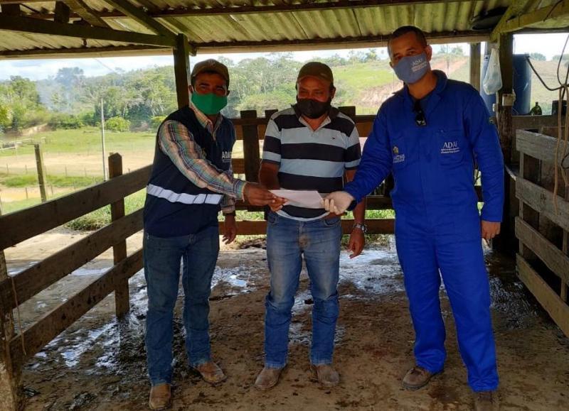Adaf finaliza estudo soro-epidemiológico em rebanho bovídeo no Amazonas