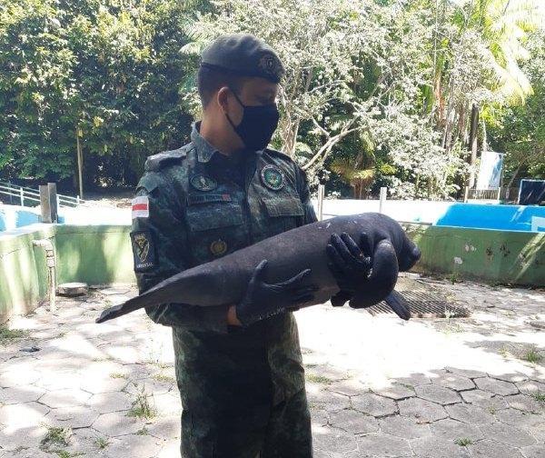 Polícia Militar e Sema resgatam filhote de peixe-boi em Itacoatiara