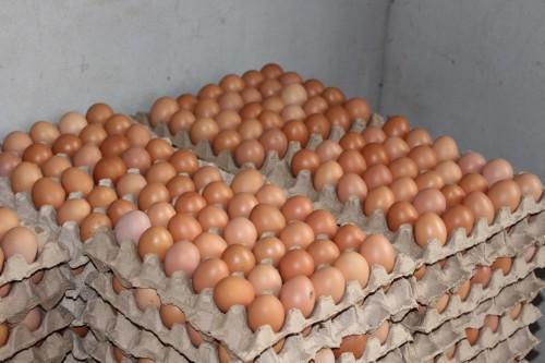 Idam incentiva produção de ovos em Benjamin Constant