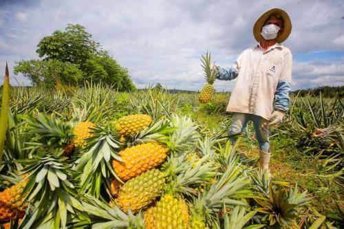 No Amazonas, 97% dos produtores estão na categoria de agricultores