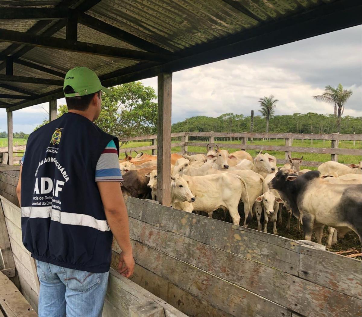 Adaf contribui para valorização da Medicina Veterinária no AM