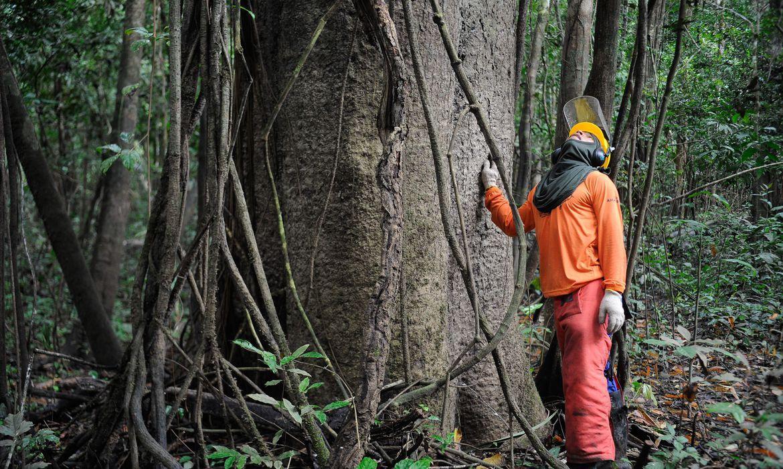Governo federal estuda concessão de cinco áreas florestais no Amazonas